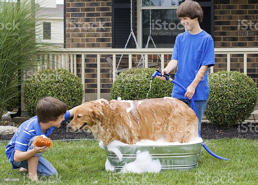 Two young boys giving a golden retriever a bath outside stock photo