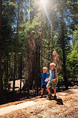 Two Young Boys Hiking Amongst Giant Sequoia Trees holding hands walking away.
