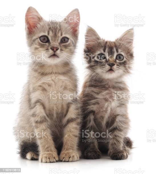 Two young cat picture id1162513813?b=1&k=6&m=1162513813&s=612x612&h=9wom7nafnukdxpocq2xsxqnfukovwlaukvg nmt4dto=
