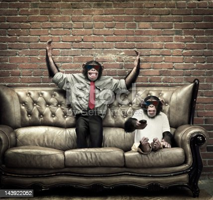 Two young male chimpanzees watching 3d movie