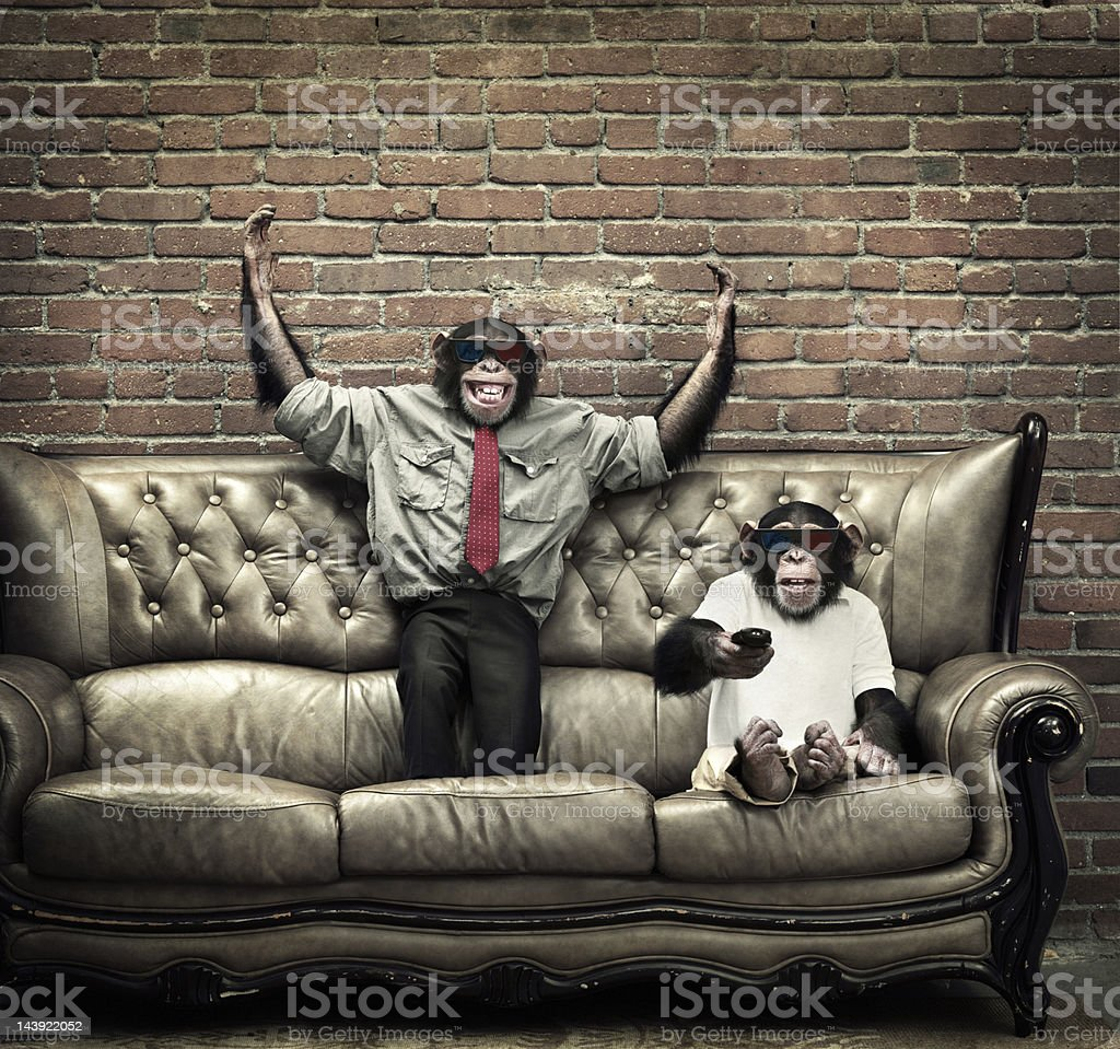 Two young male chimpanzees watching 3d movie stock photo