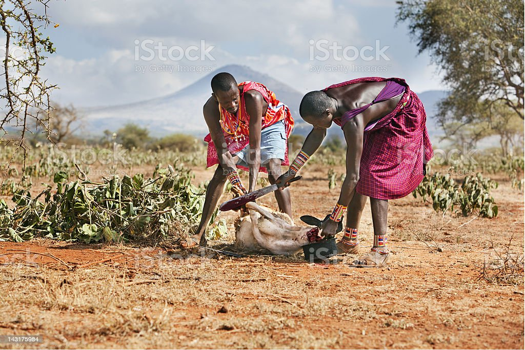 Two young masai ready to slaughter a goat. royalty-free stock photo