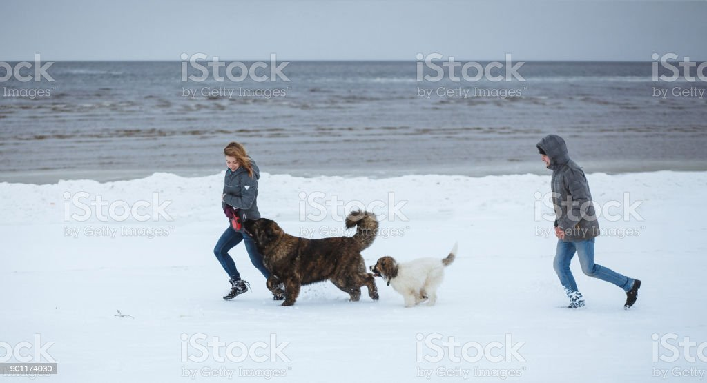 Two young people and two caucasian shepherd puppies running on the...