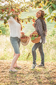 Two Young Woman Enjoy in Orchad  Picking Up Cherries from Tree, Goriška Brda, Slovenia
