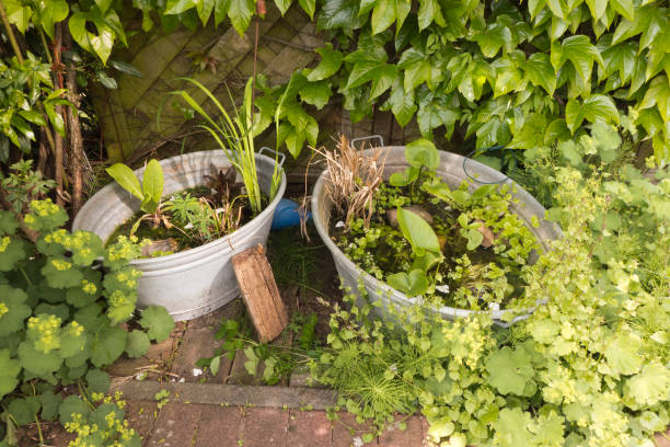 two zinc tubs as small garden ponds planted with aquatic plants. all around, the lady's mantle, alchemilla mollis, wild wine and wild rose is flourishing. an idyllic place on the terrace - bacinella metallica foto e immagini stock
