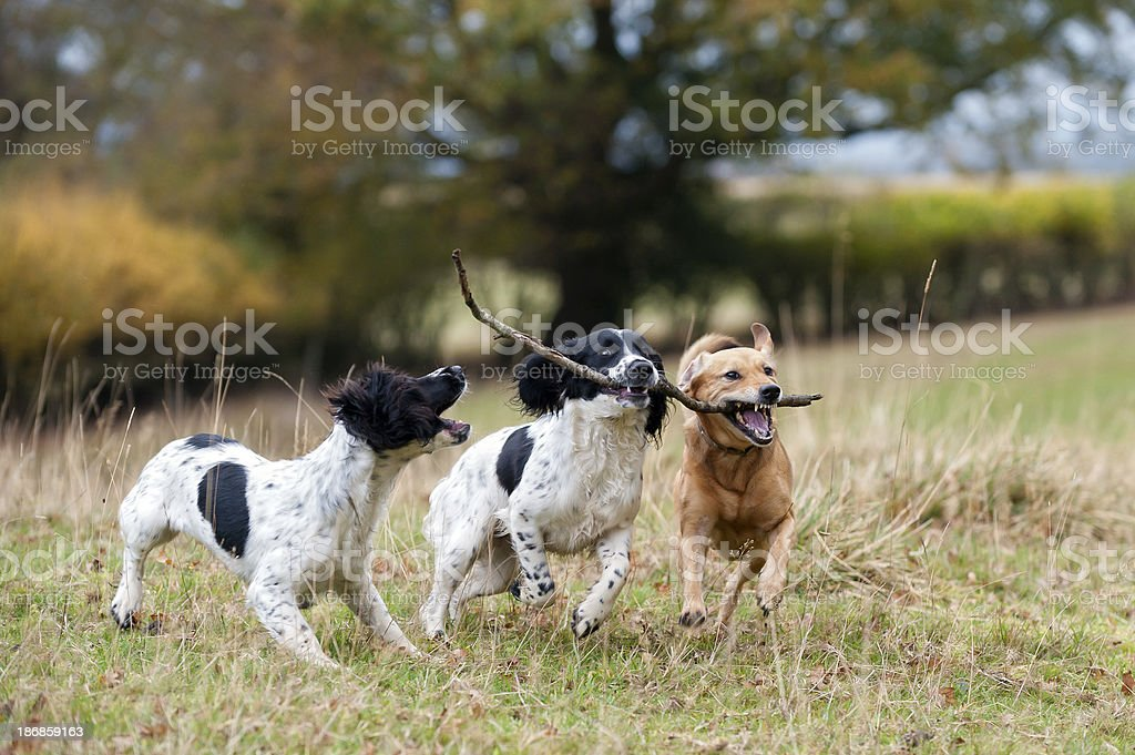 twos company, threes a crowd! royalty-free stock photo