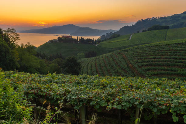 Txakoli vineyards at sunrise, Cantabrian sea in the background, Getaria in Basque Country, Spain stock photo