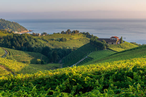 Txakoli vineyards with Cantabrian sea in the background, Getaria in Basque Country, Spain stock photo