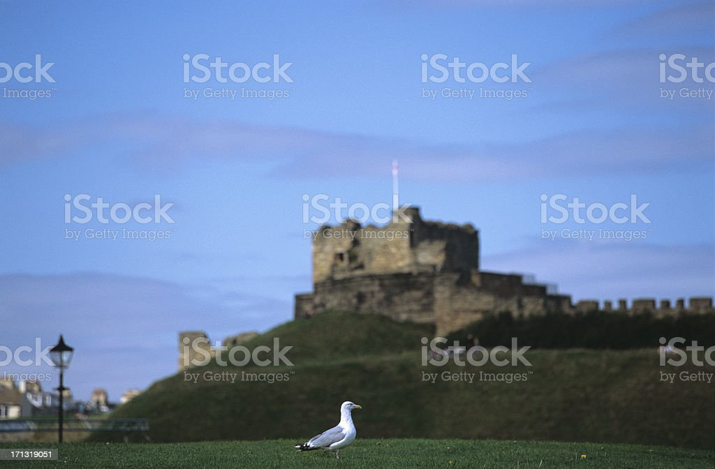 Tyenmouth Castle with seagull - English historic landmark royalty-free stock photo
