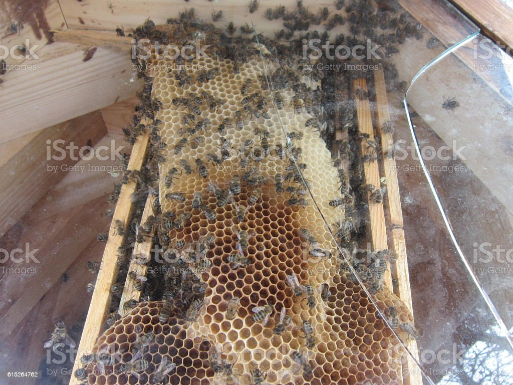 Type of a beehive from within stock photo