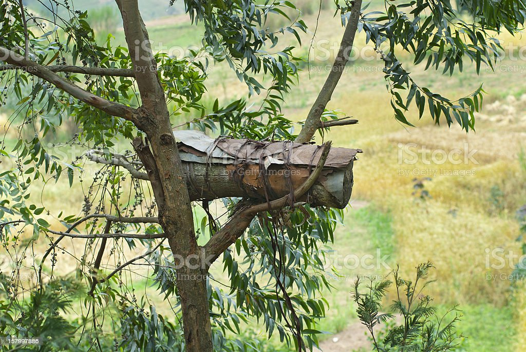 Typical African beehive in a tree stock photo