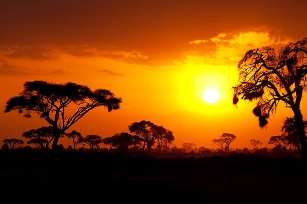 typical african sunset - 平原 個照片及圖片檔