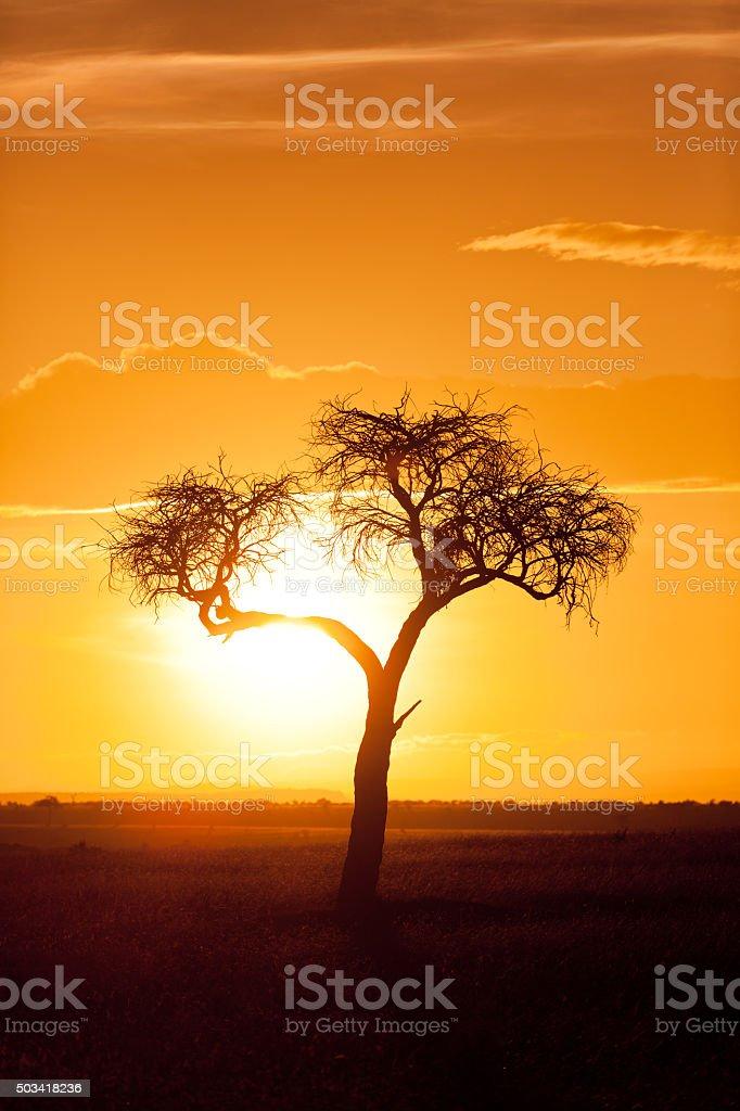 Typique d'Afrique au coucher du soleil - Photo