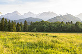 Landscape of the alpine meadows, forest in the mountains area
