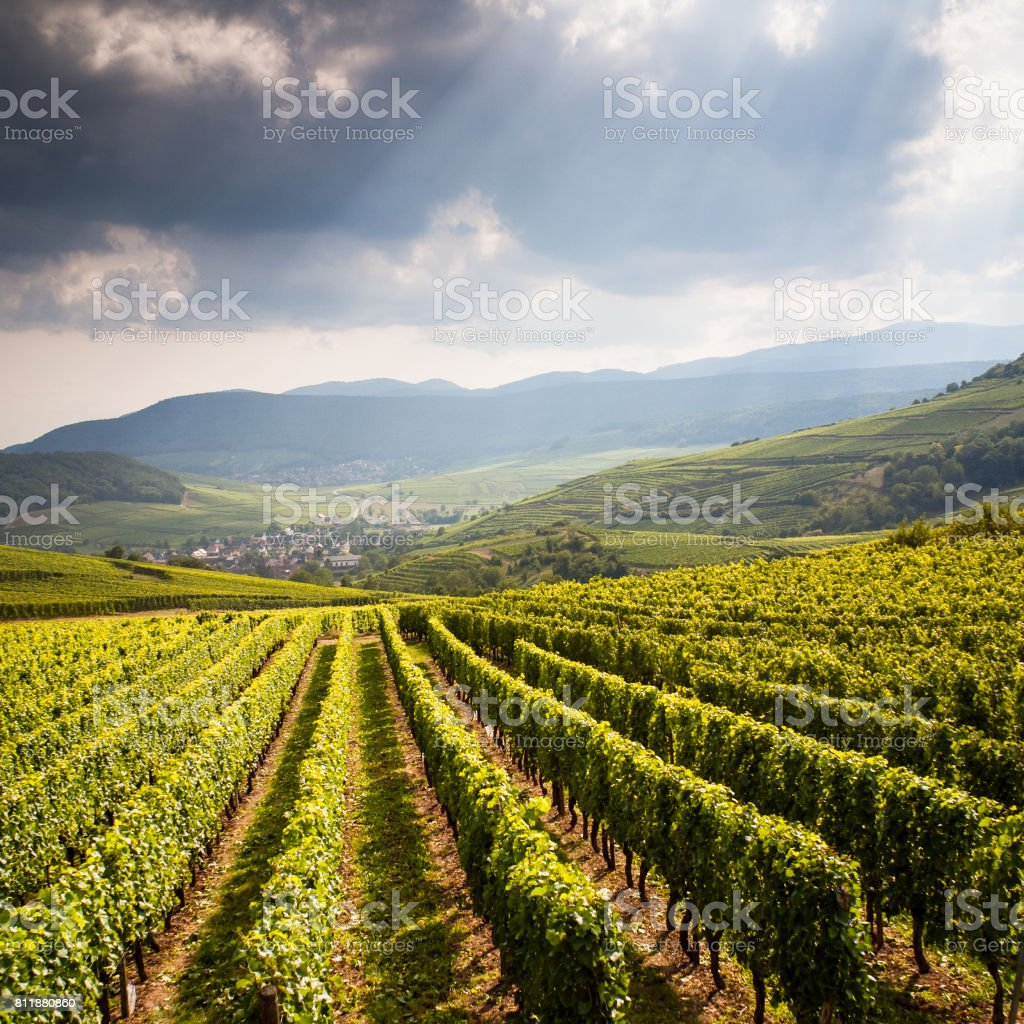 Typical alsatian landscape with vineyard and hills  under a stormy summer sky - foto stock