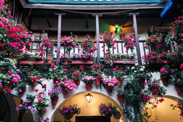 Typical andalusian courtyard in Cordoba, Andalusia Spain with a lot of plants Typical andalusian courtyard in Cordoba, Andalusia Spain with a lot of plants courtyard stock pictures, royalty-free photos & images