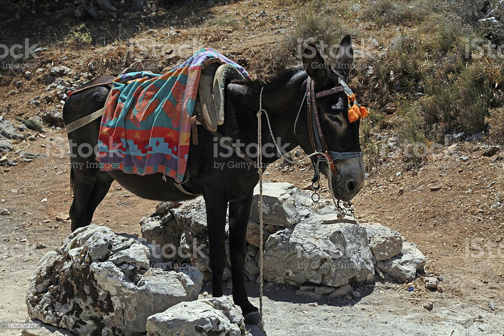typical greek donkey with multicolor saddle royalty-free stock photo