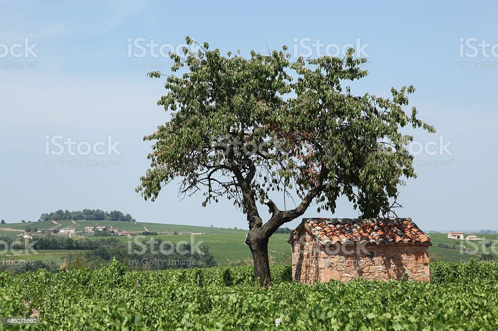 Typical landscape in Beaujolais with stone hut stock photo