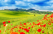 Typical landscape of Tuscany with poppies