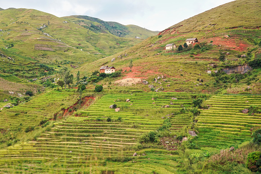 istock Typical Madagascar landscape - green and yellow rice terrace fields on small hills with clay houses in Andringitra region near Sendrisoa 1212147121