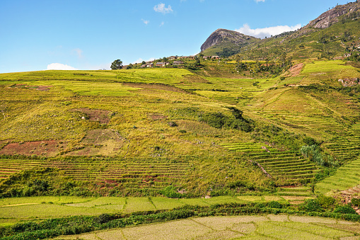 istock Typical Madagascar landscape - green and yellow rice terrace fields on small hills with clay houses in Andringitra region near Sendrisoa 1217349823