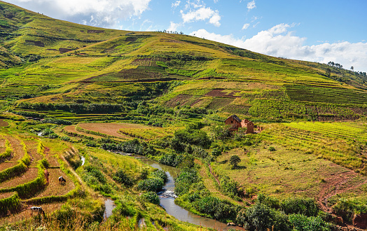 istock Typical Madagascar landscape - green and yellow rice terrace fields on small hills with clay houses in Andringitra region near Sendrisoa 1242126317