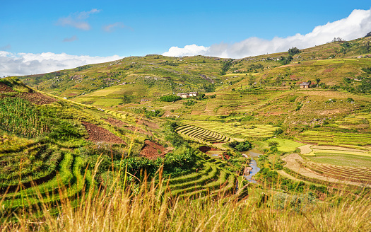 istock Typical Madagascar landscape - green and yellow rice terrace fields on small hills with clay houses in Andringitra region near Sendrisoa 1254765829