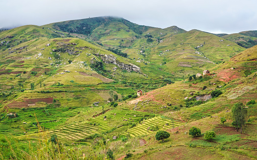 istock Typical Madagascar landscape - green and yellow rice terrace fields on small hills with clay houses in Andringitra region near Sendrisoa 1270780720