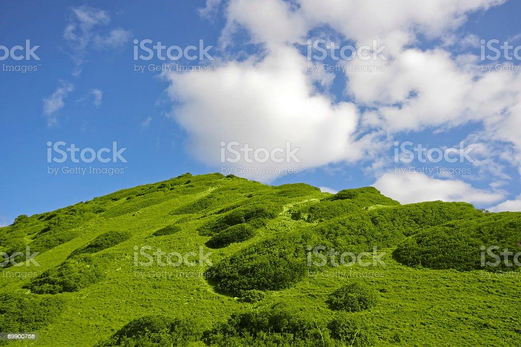 Typisch portugiesischen Landschaft im Frühling Lizenzfreies stock-foto