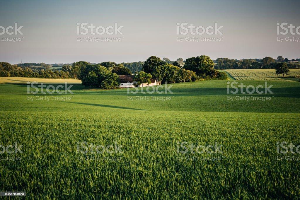 Landscape scene showing a typical rural scene in the danish...
