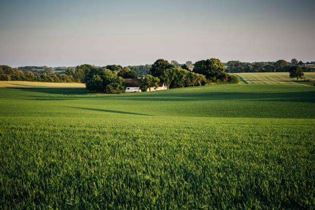 typical rural scene in denmark at sunset - danimarca foto e immagini stock