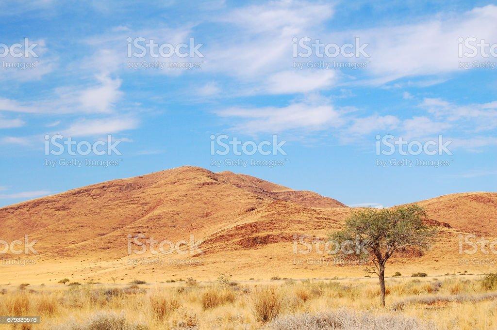 Typical Savannah in Namibia royalty-free stock photo
