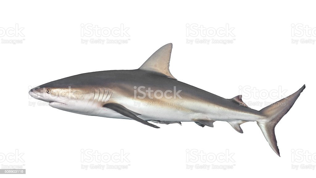 Typical side-on view of shark stock photo