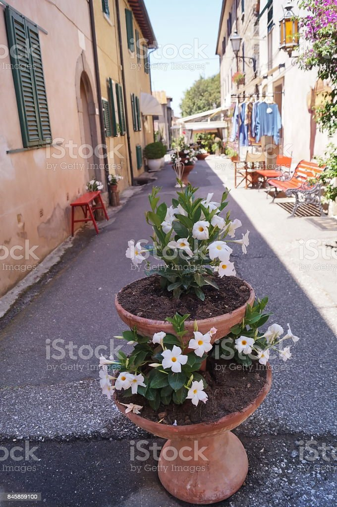 Typical street of Bolgheri - foto stock