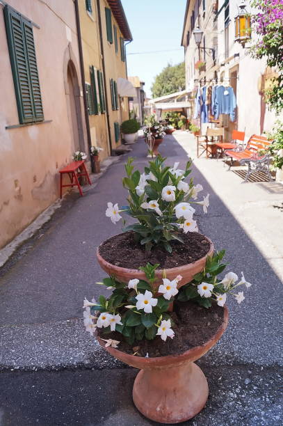 Typical street of Bolgheri - foto stock