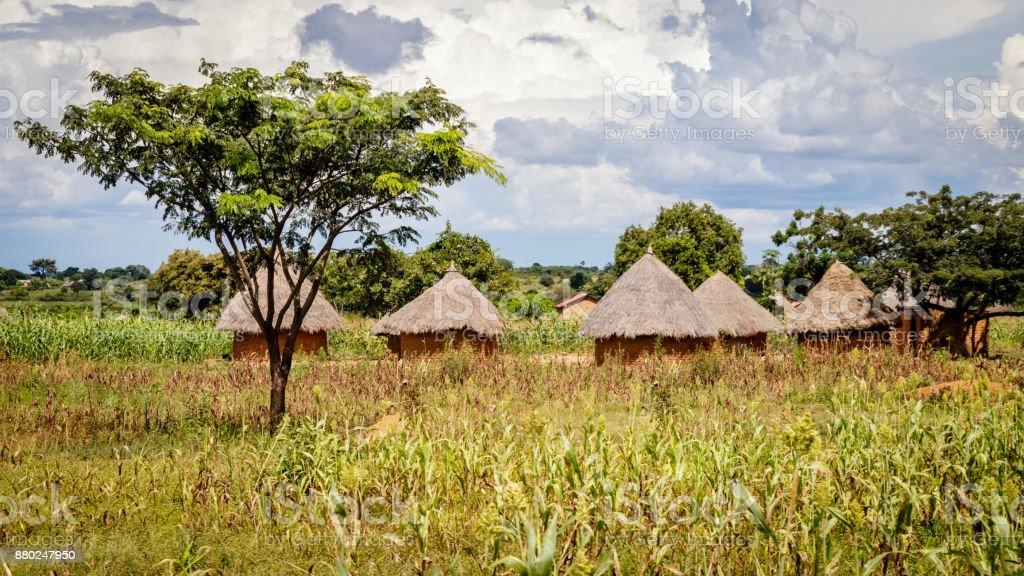 Typical Uganda huts. stock photo
