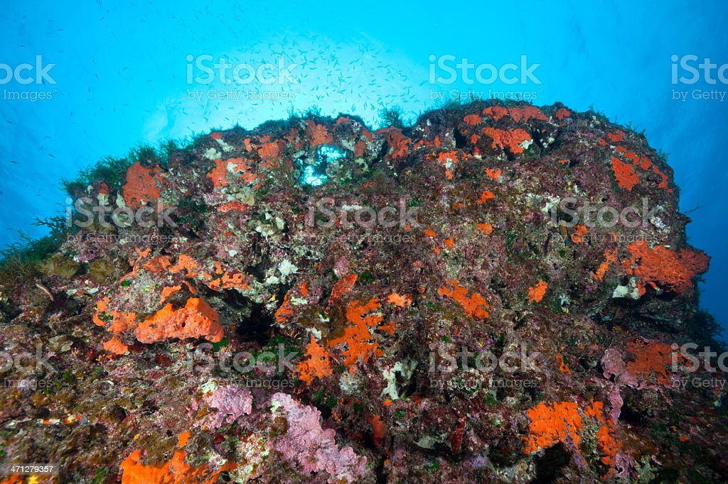 Typical underwater life at outer Reef, Malta, Mediterranean Sea stock photo