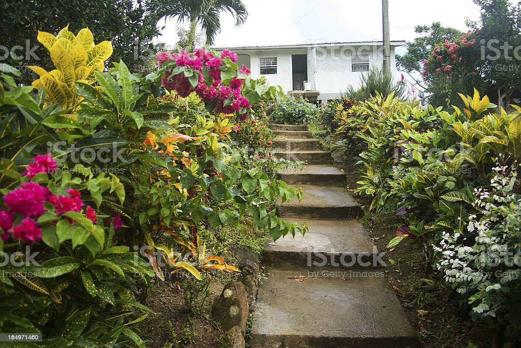 typical west indian yard with flower garden and steps stock photo