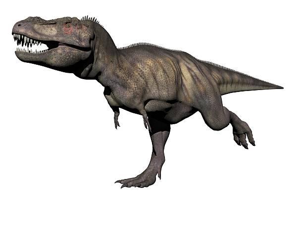 tyrannosaurus dinosaur - 3d render stock photo