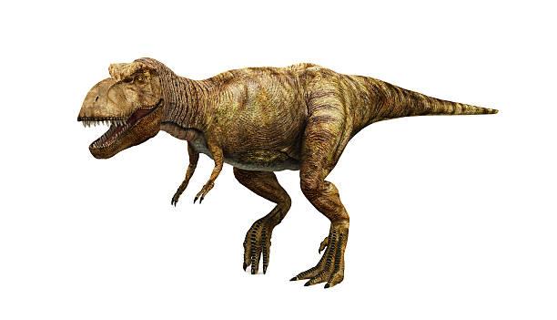 ティラノサウルスレックス - 恐竜 ストックフォトと画像