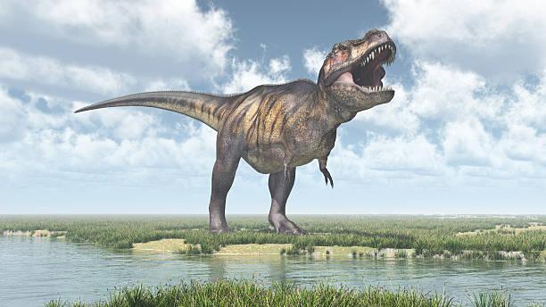 tyrannosaurus rex  - dinosaurier illustration stock-fotos und bilder