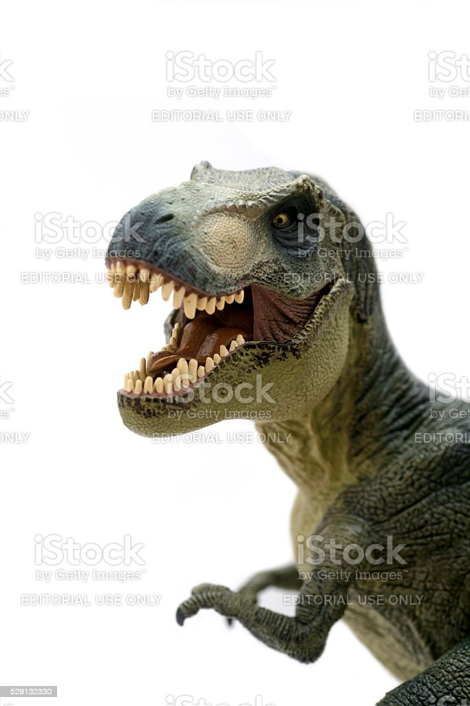 Tyrannosaurus Rex plastic model portrait stock photo