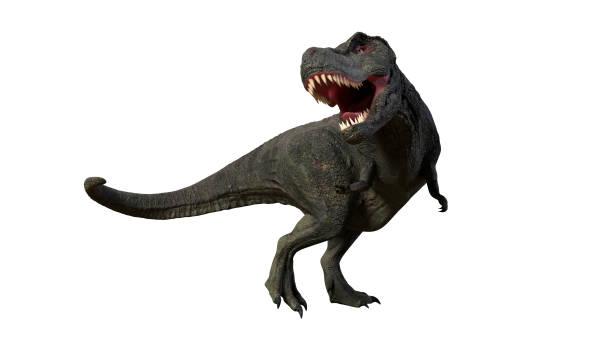 tyrannosaurus rex, roaring, anatomisch korrekte t-rex dinosaurier aus der jurazeit - dinosaurier illustration stock-fotos und bilder