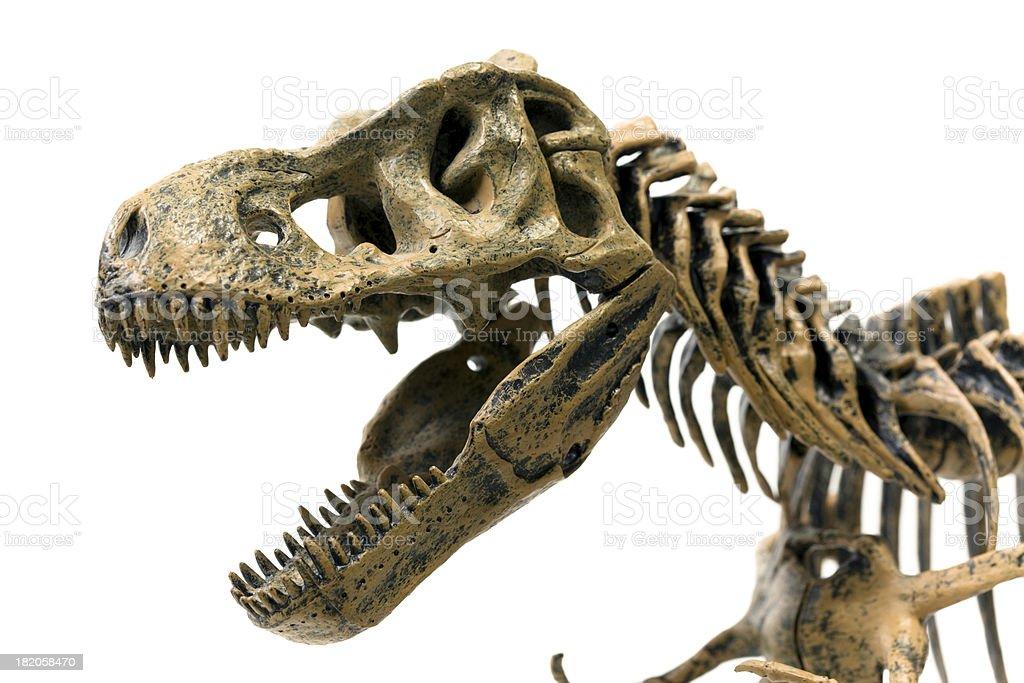 Tyrannosaurus Rex Skeleton - Photo