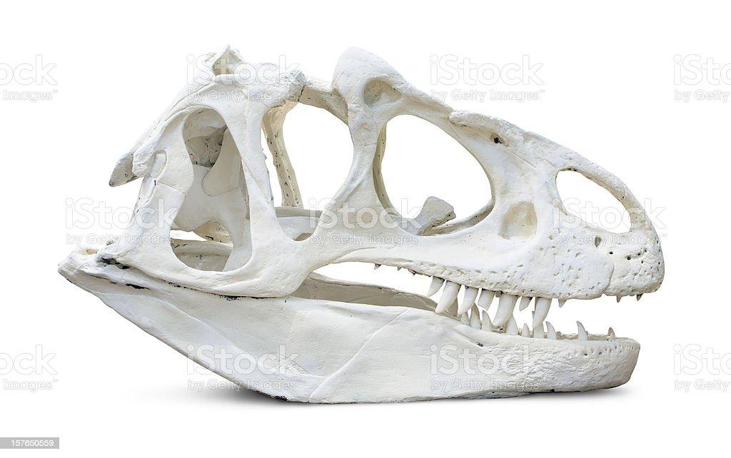 Tyrannosaurus Rex Skull royalty-free stock photo