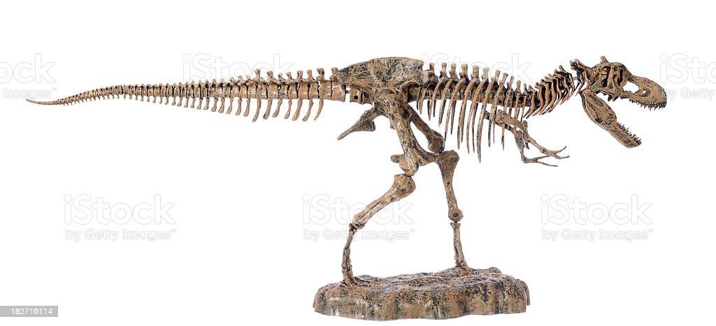 tyranosaurus rex skeleton, dinosaure squelette profile royalty-free stock photo