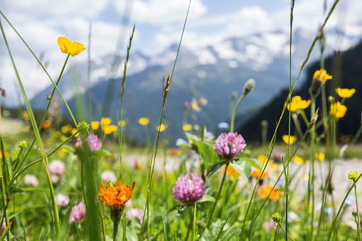 tyrol mountain landscape in summer