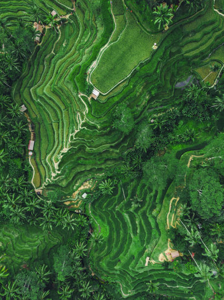 Ubud, Bali, Indonesien, Top-Luftaufnahme der Tegallalang Reis-Terrasse – Foto