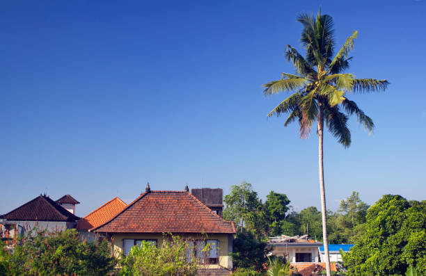 Ubud Landscape. Palm tree and traditional houses stock photo