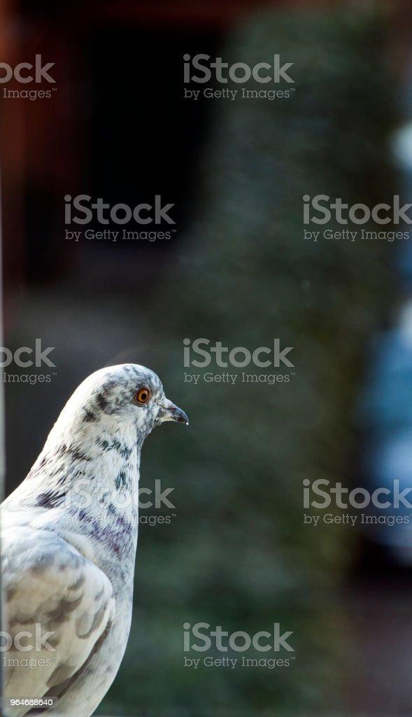 Uccello che guarda alla finestra royalty-free stock photo
